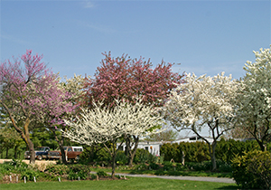 Spring Blooming Trees at Viette's