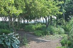 Viette garden 2010