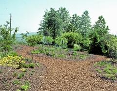 Viette Garden 1991