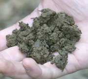 Good garden soil needs lots of organic matter.