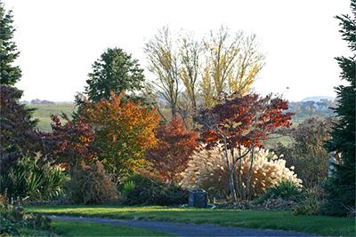 Beautiful fall garden at Viette's