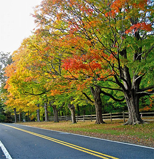 The maples in northern New Jersey were gorgeous this past weekend! Their color is much more vibrant than our oaks in Virginia.