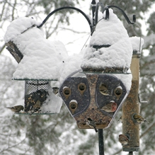 An array of bird feeders keep the birds fed all winter!