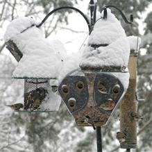 An array of bird feeders keep the birds fed all winter!