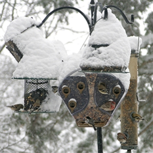 An array of bird feeders kept the birds fed during our snowy winter last year!