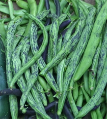 Rattlesnake beans are a delicious heirloom pole bean - my favorite.