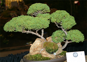 The bonsai display was amazing!