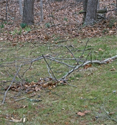 More downed branches
