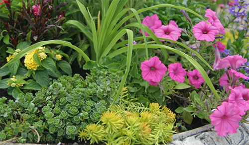 Sam's colorful container garden