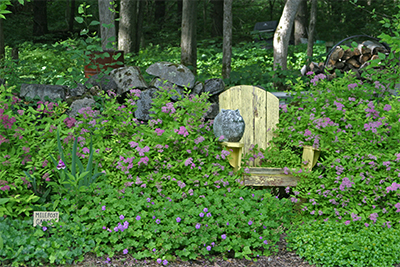 "Colorful Spirea spill over a chair in the ""Milepost Garden"""