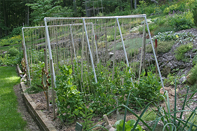 Leslie's vegetable garden