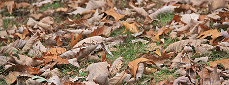 Fall leaves cover the lawn