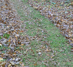 a mulching mower chops up the leaves and deposits small pieces on the lawn