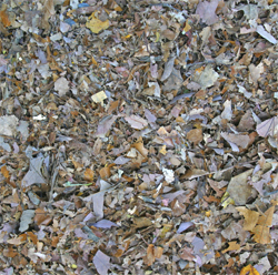 A beautiful pile of shredded leaves created by mowing over leaves without the mulching attachment. This pile can be used for mulch or to create compost or leaf mold.