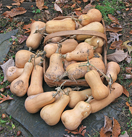 Our butternut harvest - and this doesn't include what we've already eaten!