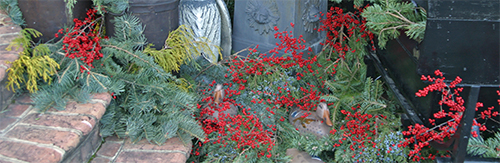 A mix of evergreen boughs and 'Sparkleberry' holly makes a festive holiday display