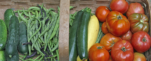 Nothing better than fresh, home-grown vegetables.