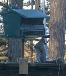 Oh Boy! A new feeder filled with lots of sunflower seeds!
