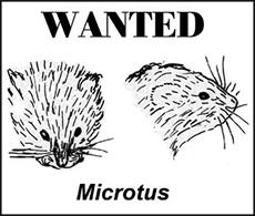 Microtus