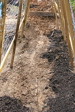 Cucumber trellis after replacing some of the washed out soil