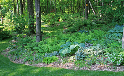 Another shade garden at the edge of the woods incorporates many native ferns.