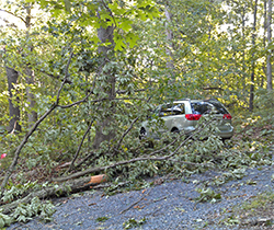 The tops of several trees and many fallen branches surround my car.