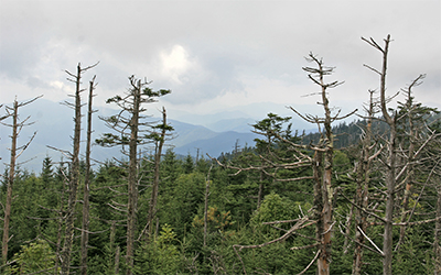 A hazy view from the top of Clingmans Dome
