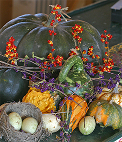 Bittersweet vines are a colorful addition to festive fall arrangements