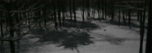 Moonlight makes shadows on the snow