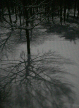 Moonlight shining through a large beech created an intricate shadow on the snow