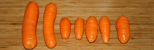 Carrots harvested in January