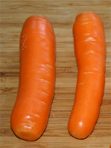 Two Nantes Half Long carrots freshly harvested January 12th!