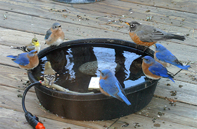 "Everyone enjoys a drink at the ""watering hole""!"