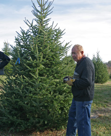 Andre searches for the perfect tree at a local tree farm.