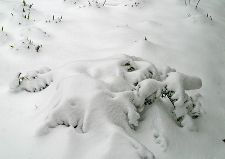 China Girl holly buried and flattened by the heavy snow