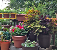 Containers of Coleus, geranium, and herbs along the railing.