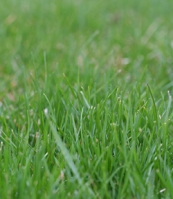 Maintaining a lush green lawn requires more nitrogen and correct pH.